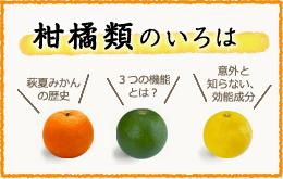 柑橘系のいろは